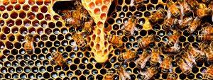 ¿Cómo saber si la miel es pura o no?