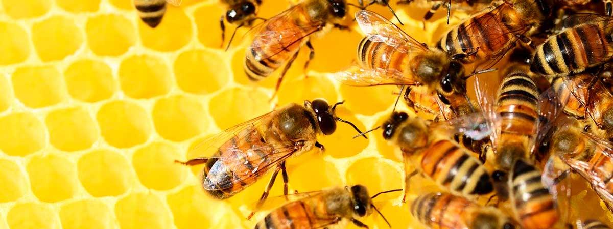 Trucos para saber si la miel es de calidad o no