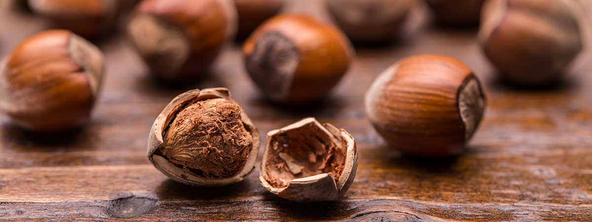 Avellanas - Frutos secos ricos en proteínas